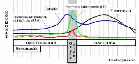para que sirve la hormona foliculo estimulante